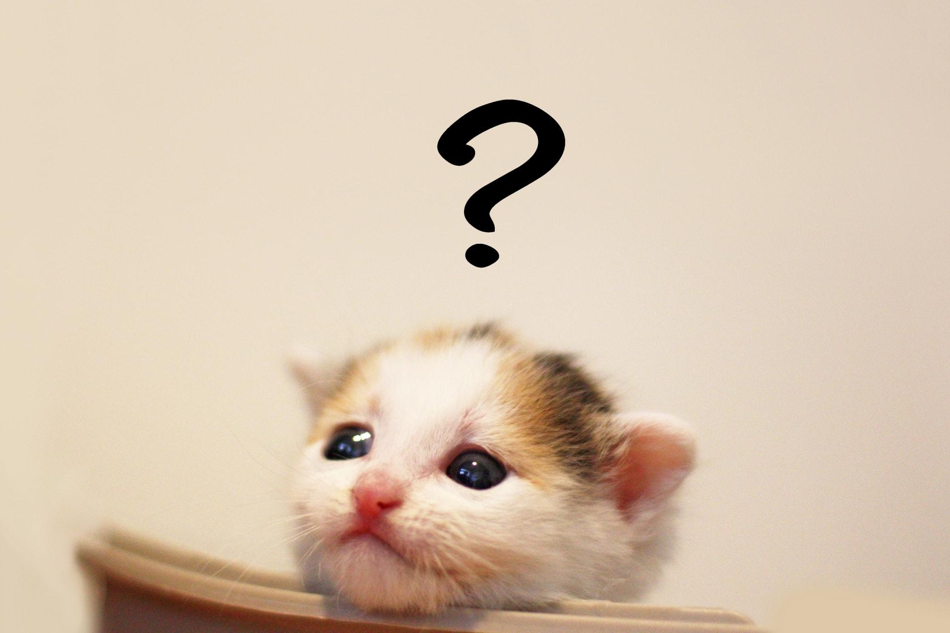 猫のお悩み