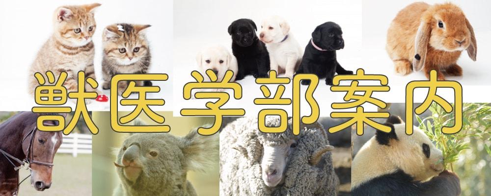 獣医学部案内