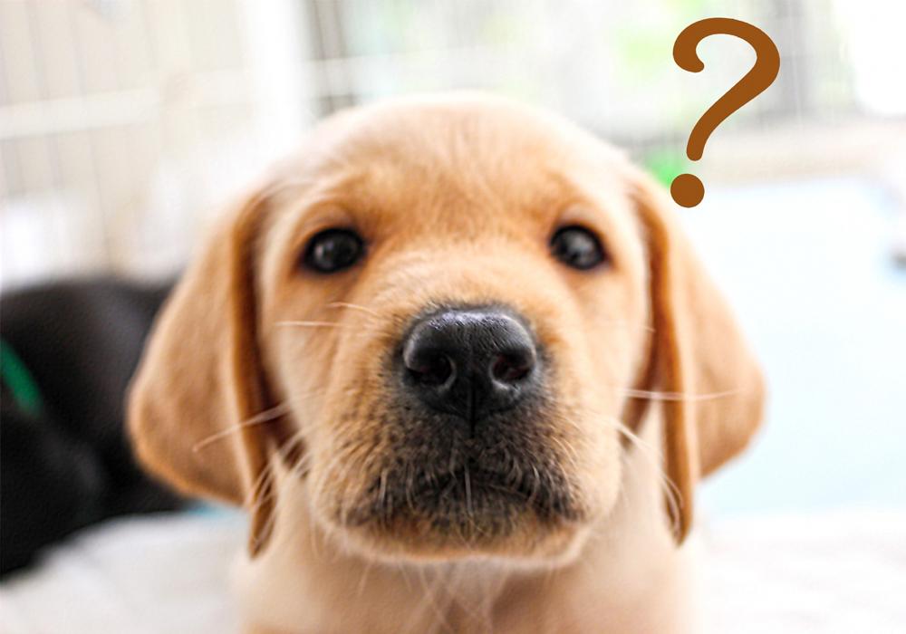 獣医学部はどんなことするの?